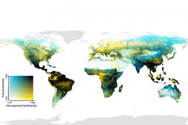 Die globale Verteilung der Überlappung oberirdischer (Säugetiere, Vögel, Amphibien und Pflanzen) sowie unterirdischer (Wirbellose im Boden, Pilze und Bakterien) biologischer Vielfalt. Dunkle Bereiche haben eine hohe biologische Vielfalt über dem und im Boden; hellgelbe Bereiche eine hohe oberirdische biologische Vielfalt, aber geringe Vielfalt im Boden; blaue Bereiche haben eine niedrige oberirdische biologische Vielfalt, aber artenreiche Gemeinschaften im Boden; helle Gebiete sind oberhalb und unterhalb der Bodenoberfläche artenarm. Foto: Conservation Biology