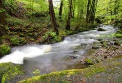 Im Fluss: Unverbautes Gewässer im Erzgebirge. Foto: Uwe Schroeder