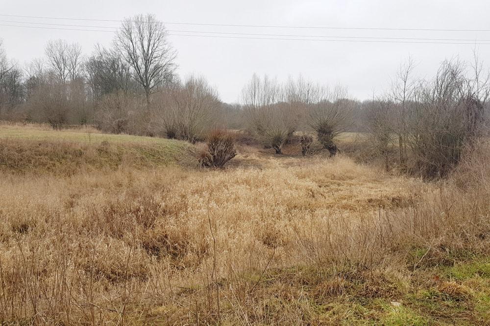 Der alte Luppe-Verlauf ist im Gelände noch sehr gut zu sehen. Foto: NuKLA e.V