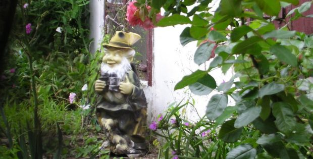 Grüße vom Gartenzaun. Foto: L-IZ.de