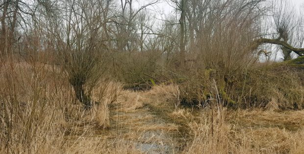 Reste des alten Flusslaufs haben sich als Lache erhalten. Foto: NuKLA e.V.