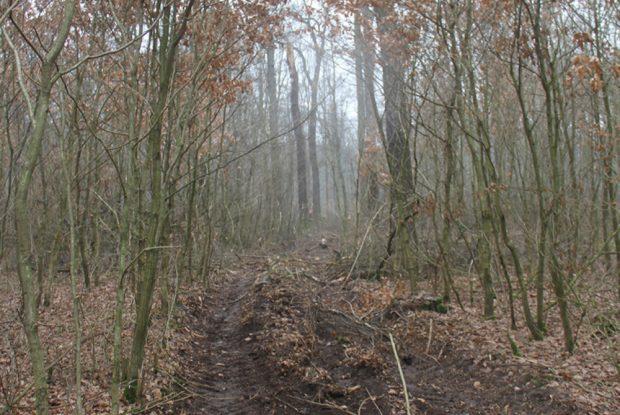 Von schweren Fahrzeugen zerfahrener Wald. Foto: NuKLA e.V.