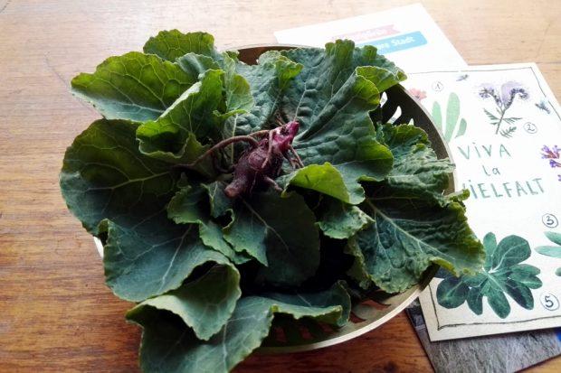 Übrigens, Topinambur und Wildkohl gaben meiner Gemüsesuppe eine vorzügliche Note. Foto: Olav Amende