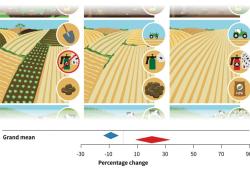 Die Intensität der Landnutzung lässt sich anhand verschiedener Indikatoren ableiten (z.B. manuelle Bearbeitung von Ackerland oder Verzicht auf Pestizide -> niedrige Intensität / Nutzung großer Maschinen und chemischem Dünger -> hohe Intensität). In den drei dominierenden Produktionssystemen (Lebensmittel, Futtermittel, Holz) erhöht die Intensivierung den Ertrag (+ 20,3%, roter Pfeil), führt jedoch auch zu einem Artenverlust (-8,9%, blauer Pfeil). Bild: UFZ