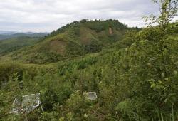 Im Experiment BEF-China variiert die Zahl der Baumarten zwischen verschiedenen Teilflächen. Bild: Helge Bruelheide