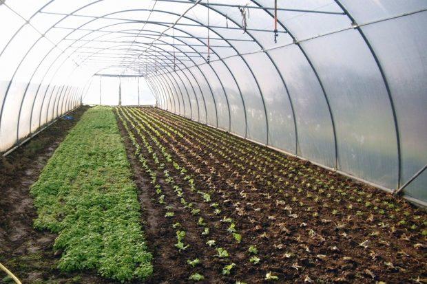 Im Vergleich zu industriellen Nahrungsmittelproduzenten sind die Gewächshäuser eher klein. Foto: Biohof Bohne