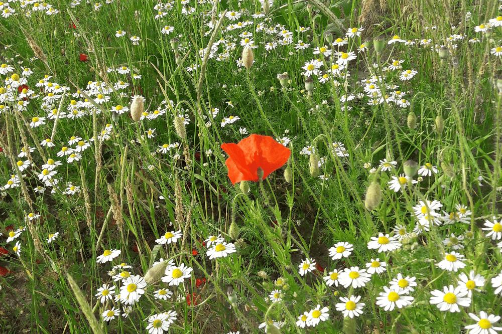 Wilde Wiese im Vorgarten. Foto: L-IZ.de