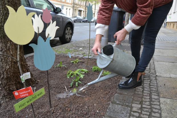 Pflanzaktion - KÖ blüht auf. © Ökolöwe