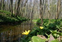 Die Paußnitz im Frühling. Foto: Ralf Julke