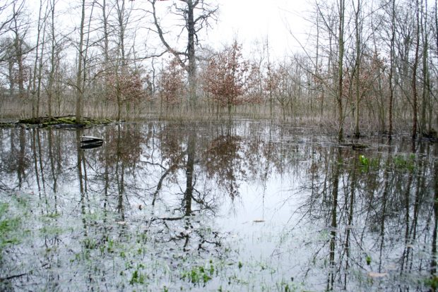 Überflutung 2019 im Gebiet der Paußnitz. Foto: Ralf Julke