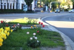 Ein Leben in der urbanen Großstadt heißt Verkehr, Umweltschutz und Ausgleich von Interessen. Die Ökolöwen mit ihren hausazfgaben für den neuen Stadtrat. Foto Michael Freitag