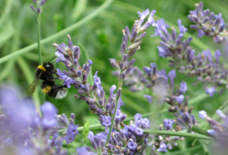 Insektenvielfalt im Stadtgarten Connewitz © Ökolöwe