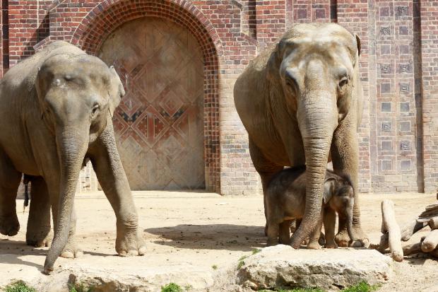 Rani, Don Chung und das Jungtier © Zoo Leipzig