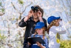 """""""Stunde der Gartenvögel"""" vom 10. bis 12. Mai - NABU ruft zum Vogelzählen auf, Foto: Hennigs"""