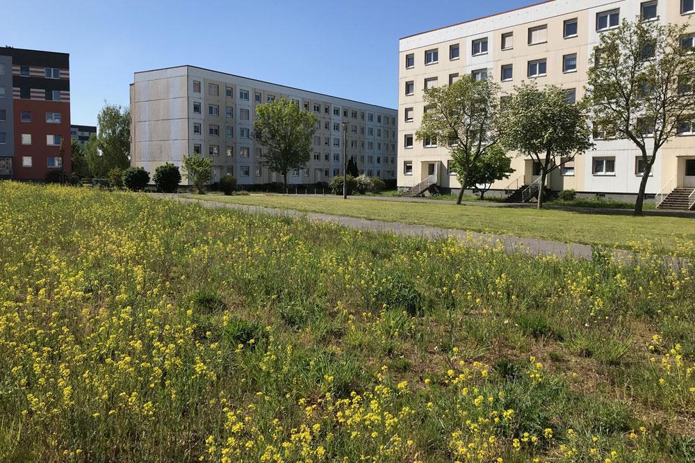 Im Vordergrund eine Blühwiese, im Hintergrund eine konventionelle Rasenfläche vor Wohnblöcken im Stadtteil Nord. Foto: Stadt Delitzsch/ Nadine Fuchs