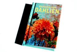 Heike Mohr: Bezaubernde Dahlien. Foto: Ralf Julke