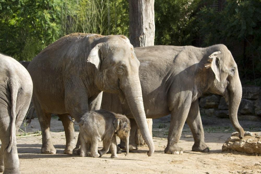 Don Chung mit ihrem Ziehkind Ben Long und Trinh © Zoo Leipzig