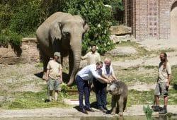 Mit Ersatzmilch getauft - der kleine Leipziger Bulle Ben Long © Zoo Leipzig