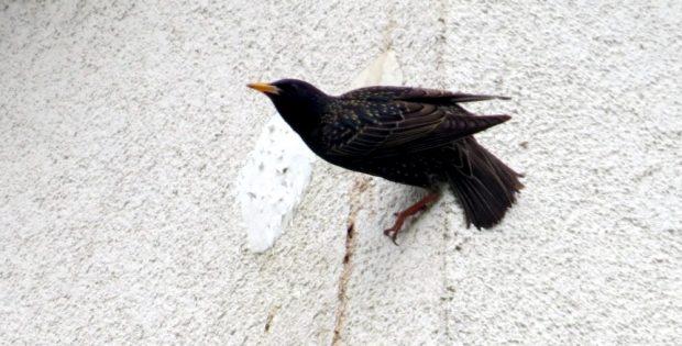 Vogeltod hinter zugeschmierten Löchern. Foto: NABU Leipzig