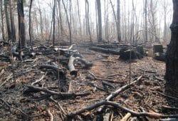 Waldbrandfläche im Landkreis Lepzig vom April 2019. Foto: Untere Forstbehörde im Landkreis Leipzig