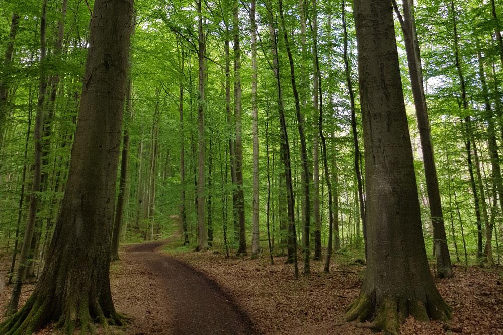 Im Lübecker Stadtwald. Foto: NuKLA e.V.