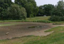 Der leere Teich im Rosental. Foto: Claus Reinhardt