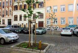 Neue Straßenbäume im Leipziger Süden. Foto: Ökolöwe