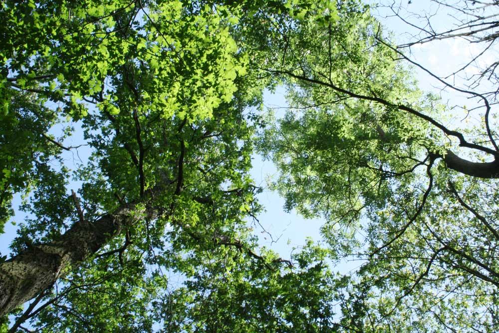 Waldgebiet am Elsterstausee. Foto: Ralf Julke