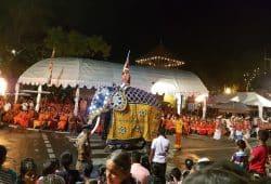 Es lebe der Elefant! Die Parade aus farbenfroh gekleideten Tänzern, Trommlern und Feuerspuckern beim Vollmondfest in Kandy. Foto: Sascha Bethe