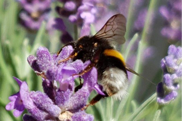 """Mehr Raum für Hummeln, Bienen und Schmetterlinge: Das ist das Ziel der sachsenweiten Aktion """"Sachsen blüht"""". Fotos: Landratsamt"""