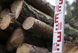Plantagenholz, gestapelt. Foto: IG BAU