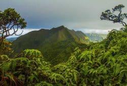Der Ko'olau auf der Insel O'ahu in Hawai'i. Forscher fanden heraus, dass dort in älteren Wäldern die Biodiversität zwar stärker ausgeprägt ist als in jüngeren, doch dass dieser Effekt durch das Einbringen fremder Arten verwässert werden könnte. Foto: William Weaver