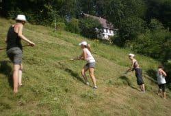 Vier Ehrenamtliche pflegen eine artenreiche Bergwiese im Erzgebirge. Foto: Kay Meister