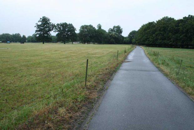 Weiden an der Möncherei. Foto: Ralf Julke