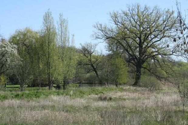 Das NuKLA-Grundstück am Stahmelner Anger. Foto: Ralf Julke
