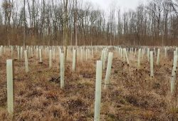 Bäume in Reih und Glied ... Foto: NuKLA e.V.