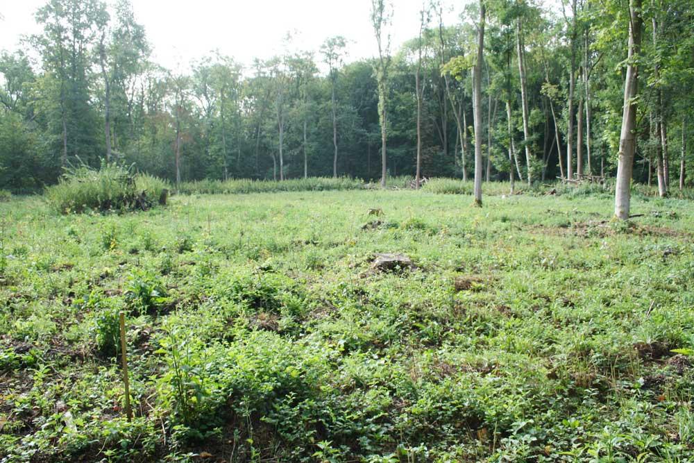Femelschlag im Waldgebiet Die Nonne. Foto: Ralf Julke