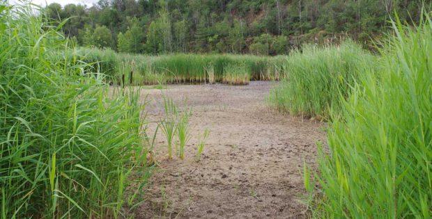 Leergepumpt: Biotop am Holzberg. Foto: Bürgerinitiative Böhlitz