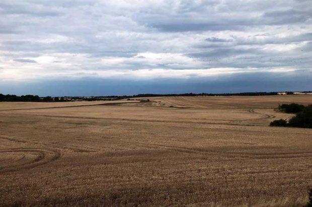 Monotone Landschaften sind das Ergebnis intensiver Landwirtschaft. Mit dem Reformvorschlag der EU könnte laut den Forschern die Intensivierung unvermindert weitergehen. Foto: Bild: Sebastian Lakner