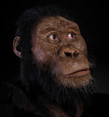 """Die Rekonstruktion des Gesichts von """"MRD"""" durch John Gurche wurde durch eine großzügige Spende von Susan und George Klein ermöglicht. Foto: Matt Crow, Cleveland Museum of Natural History"""