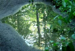 Artenreiche Mischwälder können den Klimawandel besser verkraften. Foto: Ralf Julke