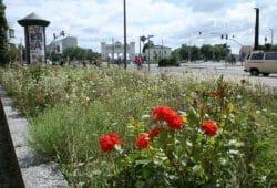 Viel zu selten in Leipzig: richtige Blühbeete. Foto: Ralf Julke
