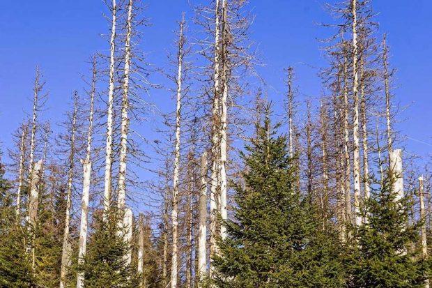 Der Klimawandel wirkt sich massiv auf die Natur aus, zum Beispiel im Harz. Foto: iDiV, Christian Müller
