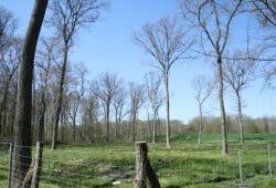 Kahlschlag mit ein paar großen Rest-Bäumen in der Luppeaue. Foto. Ralf Julke