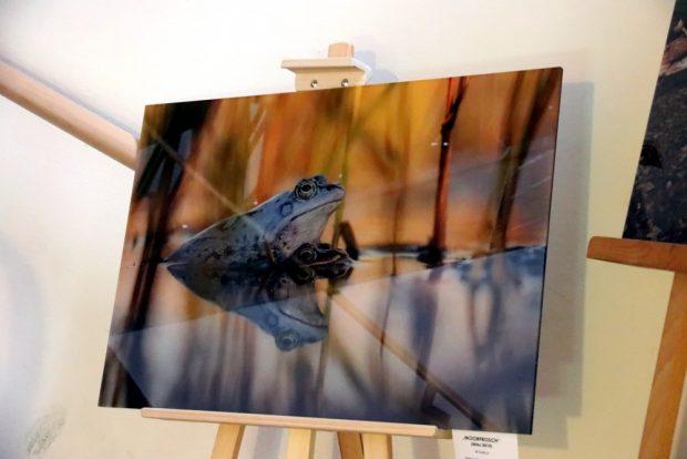 Eine Wanderausstellung von Motiven aus dem Auwald wird ebenfalls an verschiedenen Oerten zu sehen sein, Kauf der Bilder ausdrücklich erwünscht. Foto: L-IZ.de