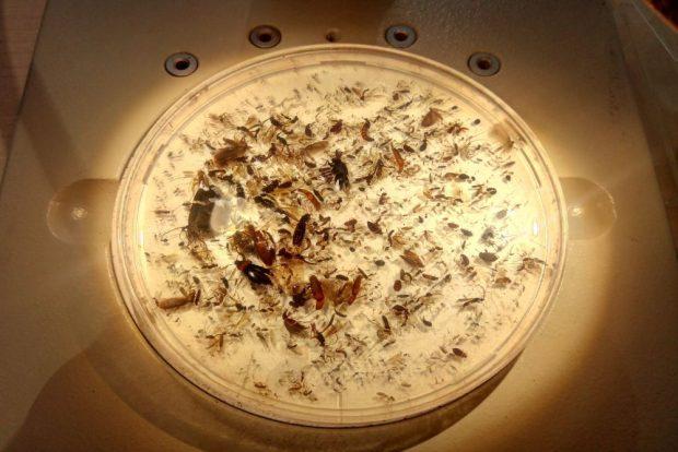 Eine Ladung Spinnen bei Otto unter dem Brennglas. Foto: privat