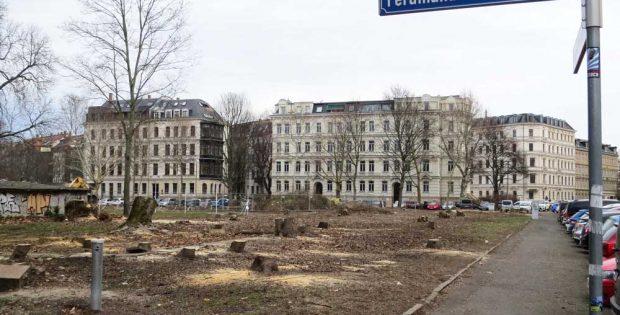 Trauriger und viel zu häufiger Anblick: Wie hier in Leipzig sind Baumfällungen in Sachsen an der Tagesordnung. Foto: Karsten Peterlein