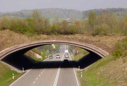 Grünbrücken sind wertvolle Bausteine im Biotopverbund, ermöglichen sie doch Tieren biotopübergreifend die gefahrlose Überquerung von Straßen und somit auch den Genaustausch. Foto: M. Hermann