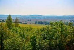 Heute Natur, morgen Beton: Von den IPO-Plänen betroffene Landschaft bei Pirna. Foto: B. Borchers