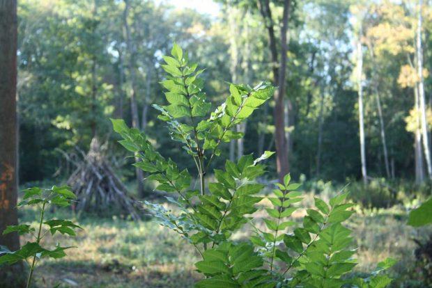 Der Auenwald braucht eine ökologische Waldpflege. Foto: Ralf Julke